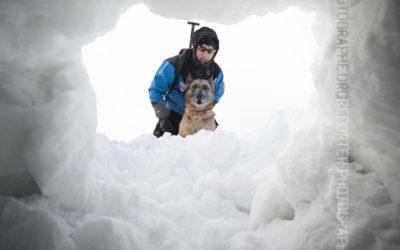 Chien d'avalanche de la CRS des Alpes