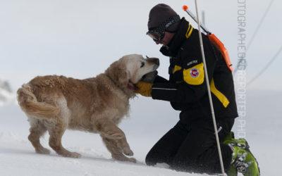 Chien d'avalanche jouant avec son maître [Ref:2310-02-1655]