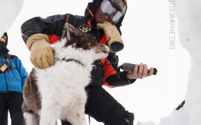 Récompense d'un chien d'avalanche [Ref:2310-02-1630]